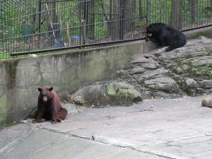 bears mom im bored