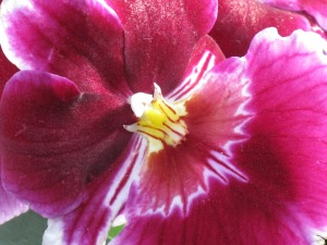 nybg orchid 11