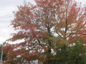 autumn in the bronx 001