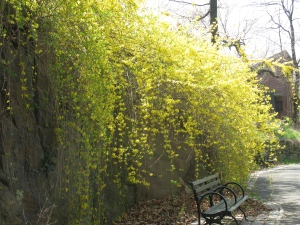 botanical gardens with Misty 055
