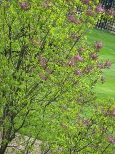 botanical gardens with Misty 061
