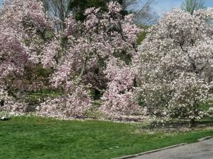 botanical gardens with Misty 078