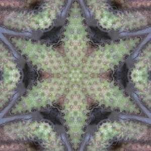jb cacti